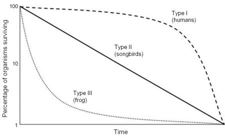 survivorship_curves